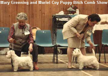a_Mary_Greening_and_Muriel_Coy_Puppy_Bitch_Comb_Show